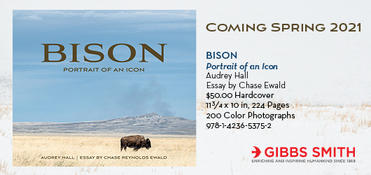 Bison: Portrait of an Icon Coming Spring 2021 Audrey Hall Essay by Chase Ewald $50.00 Hardcover 11 3/4x10in, 224 pages, 200 color photographs 978-1-4236-5375-2 Gibbs Smith Enriching and inspiring humankind since 1969